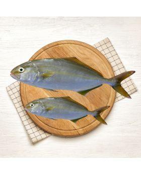 Amberjack Fish 2 KG  سفید صافی