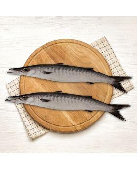 Barracuda Black Fish 2 KG  کند