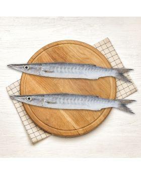 Barracuda White Fish 2 KG  کند