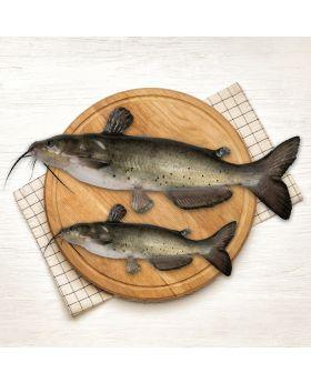 Cat Fish 2 KG  کھگکا