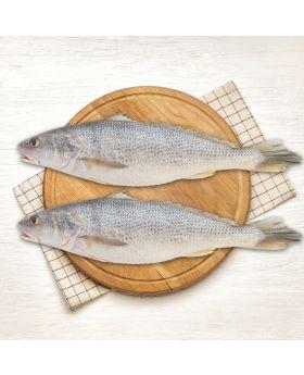 Crocker Fish 2 KG  مشکا