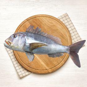 Dentex Fish 2 KG ڈاٹہی