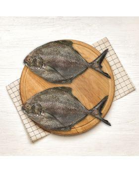 Black Pomfret Fish 2 KG  کالا پاپلیٹ
