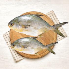 Pompano Fish 2 KG  سوناب