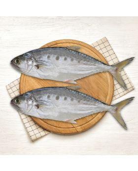 Queen Fish 2 KG  آل