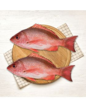 Red Snapper Fish 2 KG  ہیرا