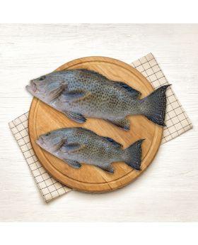 Reef Cod Fish 2 KG ڈاما