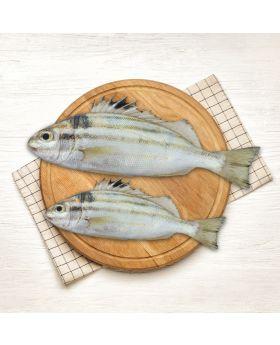Terapon Fish 2 KG  گونگورا