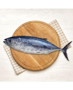Tuna Fish 2 KG  داون